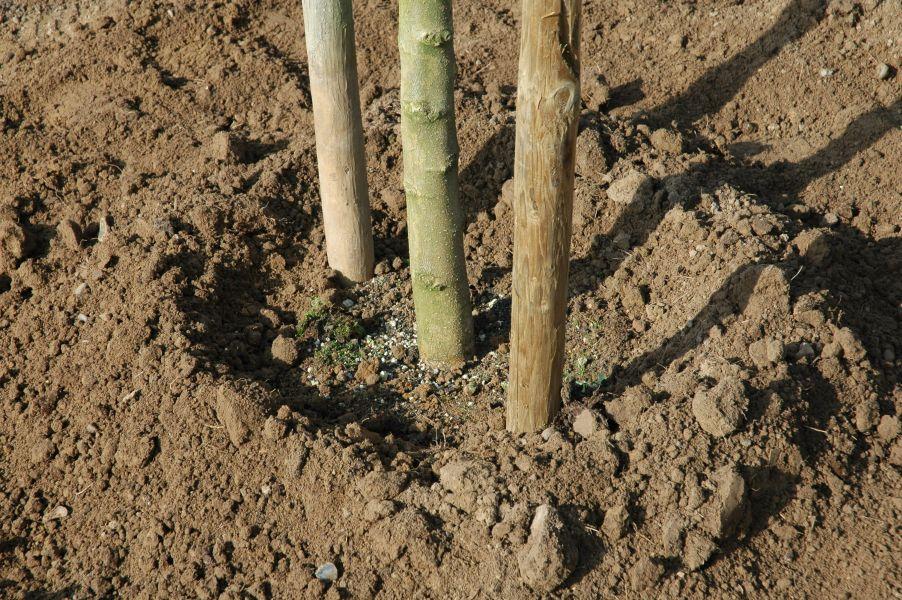 Robeet boomkwekerijen - Hoe een boom te verlichten ...